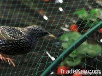 Anti- Bird Netting