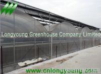 Gothic Plastic Film Multi-Span Greenhouse
