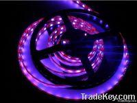 CE&RoHS  Led Strip Lighting