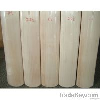 SS TON PLAIN LE CRICKET BAT