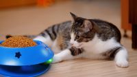 105 Rolling ball cat bowl