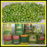 canned sweet corns/canned