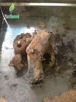 Wholesale price Sawdust charcoal