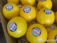 Fresh Navel And Valencia Orange