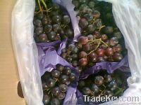 Fresh Seed Grapes