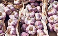 cloves of garlic for shipping straight from farm
