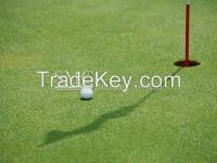 Artificial Grass - Synthetic Turf