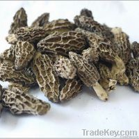 Dried morel mushrooms on sale