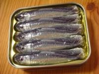 Canned Sardines in Oil