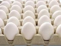 Poultry White Eggs from South Africa