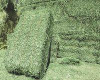 Premium Quality Alfalfa Hay Bales