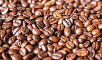 Green Arabic Coffee Beans For Hot Sale
