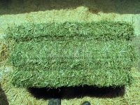 Alfafa Hay Alfalfa hay