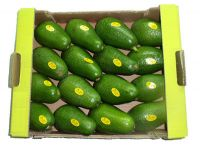 Fresh Handpicked Avocado