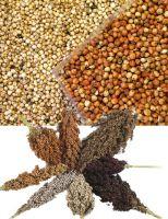 Grain Sorghum From Kenya, 100% Natural