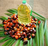 Refined Palm Oil for human consumption