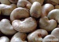 Cheap Cashew Nut | Wholesale Cashew Nut | Discounted Cashew Nut | Bulk Cashew Nut | Cashew Nut Suppliers | Cashew Nut Exporters | Cashew Nut Manufacturers | Cashew Nut Buyer | Import Cashew Nut