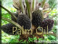 REFINED AND CRUDE PALM OIL FOR SALE