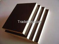 6.5mm popar Commercial Plywood Sheets/Bintangor Veneer Fancy plywood