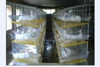 Breeding Rabbit hutch