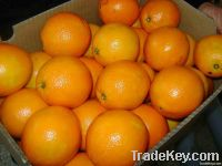 Fresh Navel Oranges