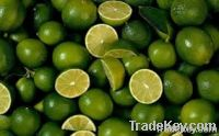 Fresh Lime & Lemon