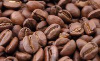 ROBUSTA COFFEE BEAN AT GOOD PRICE