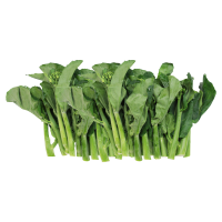 High quality fresh Chinese kale accept custom planting