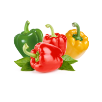 Top quality fresh green and red pepper accept custom planting