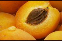 Dried Raw Sweet Apricot Kernel
