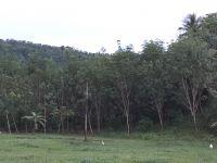 Natural Rubber Latex 60% HA DRC