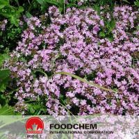 Herb Medicine Thyme Extract Powder