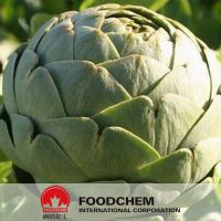 Best Quality Artichoke Plant Extracts