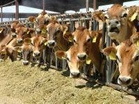 Alfalfa Hay | Animal Feed