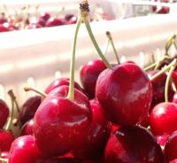Fresh berries (Cherries, Blueberries)