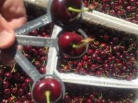 Cherries from Chile