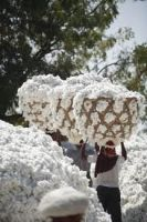 raw cotton importers,raw cotton buyers,raw cotton importer,buy raw cotton,raw cotton buyer,import raw cotton