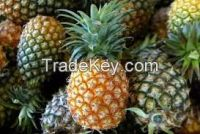 Quality Fresh Fruits