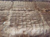 Baled coconut fiber