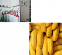 Ripening Chamber for Banana
