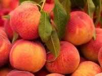 Organic and common peach