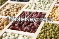 kidney beans,Green mung beans, navy beans, lima beans, pinto beans, black-eyed peas ,lentil, chick peas, Pink Bean, pinto beans,Beans,Broad Beans,Fava beans,green pea,Yellow peas,Green Split Peas,Beans & Pulses