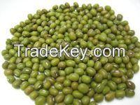 Green Bean / Mung Beans