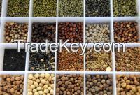 Lentils, Whole lentils, Whole Red lentil, Red Split lentil, Green Lentils - (Lens culinaris, Medic, Dals, Masoor)