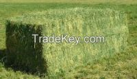 Rhodes Grass Hay in Bales