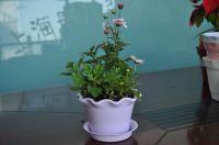 Cheap Durable Indoor Flower Pots