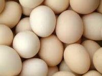 Fertile Chicken Eggs | Farm Fresh Table White Eggs | Brown Table Eggs