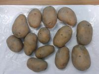 FRESH POTATO (GRANULA ROUND SHAPE)