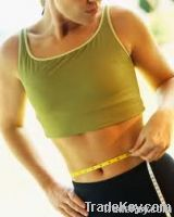 Weight loss program help you lose weight quickly