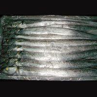 Frozen Fish & Frozen Sea food